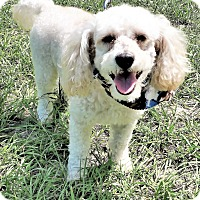 Adopt A Pet :: Winston - Tavares, FL