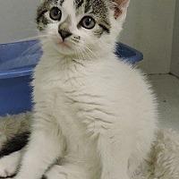 Adopt A Pet :: Elyssa - Massapequa, NY