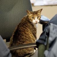 Adopt A Pet :: Zira - Baltimore, MD