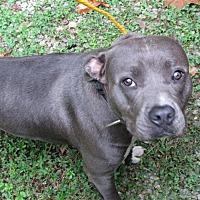 Adopt A Pet :: 17-09-2832 Xena - Dallas, GA