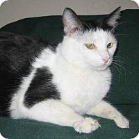 Adopt A Pet :: Ellen - Chandler, AZ