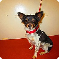 Adopt A Pet :: Coconut - Culver City, CA