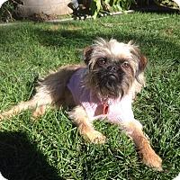 Adopt A Pet :: RAINE - ADOPTION PENDING - Los Angeles, CA