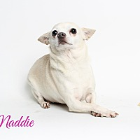 Adopt A Pet :: Maddie - Metairie, LA