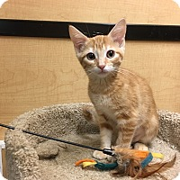 Adopt A Pet :: Madison - Riverside, CA