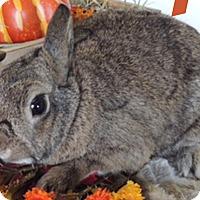 Adopt A Pet :: Spice - Paramount, CA