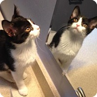 Adopt A Pet :: Palmer - Anderson, IN