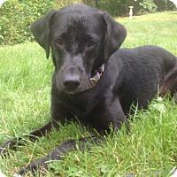 Adopt A Pet :: Winston - Groton, MA