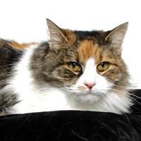 Adopt A Pet :: DAISY - Gloucester, VA