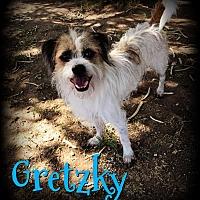 Adopt A Pet :: GRETZKY - Phoenix, AZ