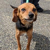 Adopt A Pet :: Oscar & Meyer - Lisbon, OH