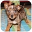 Photo 1 - Cattle Dog Mix Puppy for adoption in Hagerstown, Maryland - Chance