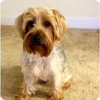 Adopt A Pet :: Luke - Spring Hill, FL