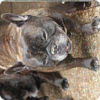 Adopt A Pet :: Garcon - Pompano Beach, FL