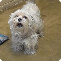 Adopt A Pet :: Ralph - Wickenburg, AZ