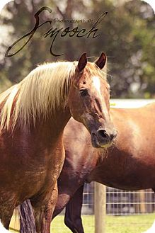 Tennessee Walking Horse for adoption in Cantonment, Florida - Beau