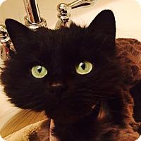 Adopt A Pet :: Bianca - Xenia, OH