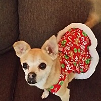 Adopt A Pet :: MINNIE - Rancho Cucamonga, CA