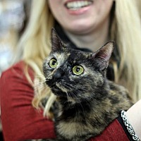 Adopt A Pet :: Tortie - New York, NY