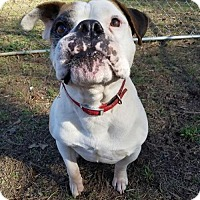 Adopt A Pet :: Humphrey - Jacksonville, AL