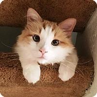 Adopt A Pet :: Ted - Orange, CA