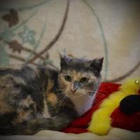 Adopt A Pet :: Molly - North Battleford, SK