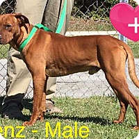 Adopt A Pet :: Benz - Waycross, GA