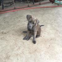Adopt A Pet :: Switch - White Settlement, TX