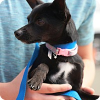 Adopt A Pet :: Star - E. Wenatchee, WA
