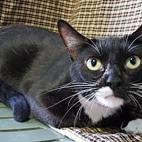 Adopt A Pet :: Baby 27216 - Prattville, AL