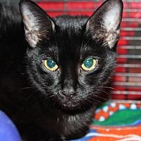 Adopt A Pet :: Mabel - Sarasota, FL