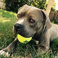 Adopt A Pet :: SNUGS - Ojai, CA