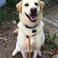 Adopt A Pet :: Dagger Barnwell - Rockaway, NJ