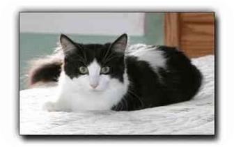 Domestic Mediumhair Cat for adoption in Howell, Michigan - Moe