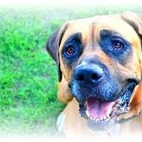 Adopt A Pet :: Abby - Phoenix, AZ