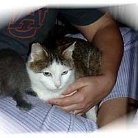 Adopt A Pet :: Karma - Montgomery, IL