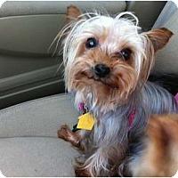 Adopt A Pet :: Tia - Fairfax, VA