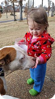 Bulldog/Labrador Retriever Mix Dog for adoption in CHICAGO, Illinois - MARIE