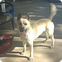 Adopt A Pet :: Luke - Los Angeles, CA