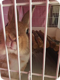 Other/Unknown Mix for adoption in High River, Alberta - Bylaw Bunny