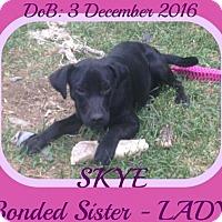 Adopt A Pet :: SKYE - Sebec, ME