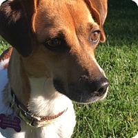 Adopt A Pet :: Genna - Fairfield, OH