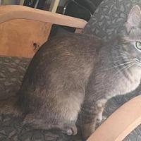 Adopt A Pet :: Skylar - Fullerton, CA