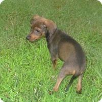 Adopt A Pet :: Fixico - West Warwick, RI