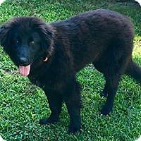 Adopt A Pet :: Tallulah - Smithtown, NY