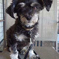 Adopt A Pet :: Buzz - Quail Valley, CA