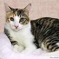 Adopt A Pet :: Elsie - Westchester, CA