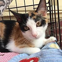 Adopt A Pet :: Josephine - Barrington, NJ