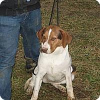 Adopt A Pet :: Nessa - Linton, IN