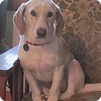 Adopt A Pet :: Naomi - Barrington, IL